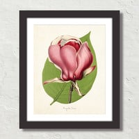 French Magnolia Lenne Giclee Canvas Print