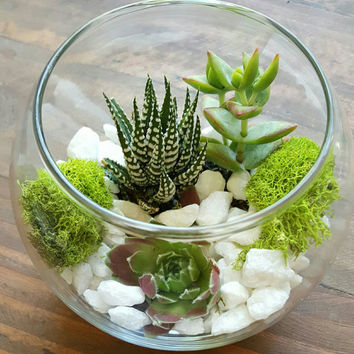 Succulent Glass Round Globe Terrarium Kit - Everything You Need! Arrangement DIY Birthday Echeveria Moss Planter Present Thank You Gift