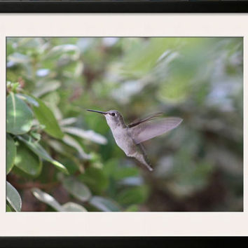 Hummingbird In Flight on a Dreamy/Misty Background Colored Photograph Nature Photography Wall hanging Home Decor Bird Garden Scene