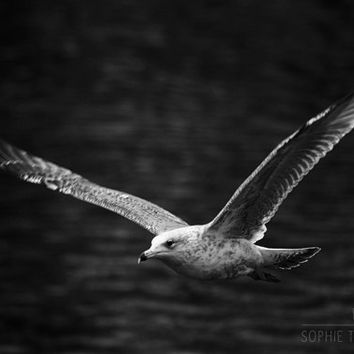 Bird canvas, black and white photography, seagull, flying bird, black wall art, fine art photography, animal photography, 24x36,16x16, 24x24