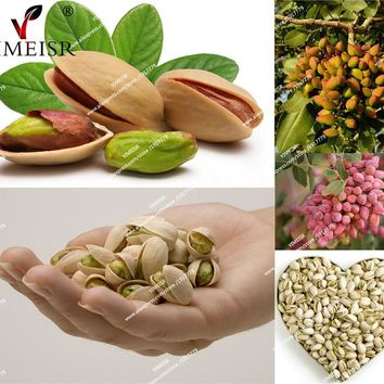 Nut tree Pistachios seeds Chinese Pistacia rare outdoor fruit tree seeds tropical plant bonsai seeds 5pcs/bag