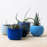 Succulent planter collection / felted bowl whimsical set / Succulents display / Blue felt vases