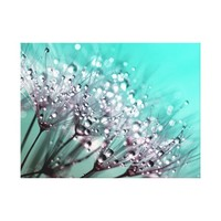 Dandelions, Water Droplets and Turquoise Canvas Print