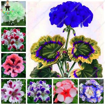 50 Pcs/Pack Rare Blue Geranium plants Perennial Rare Flower plants For Indoor Rooms Bonsai Potted Flower Elegant Mix-Color