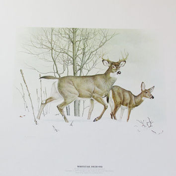 Vintage Glen Loates Deer Print, Unframed Art, Wildlife / Nature