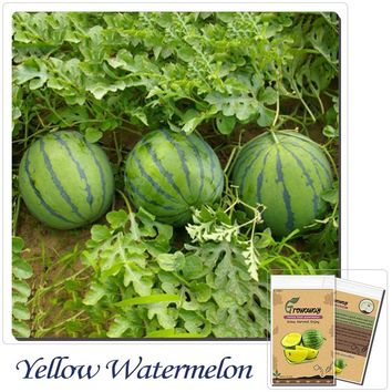 NEW Yellow Watermelon 10 Seeds Rare Fruit Sphere Very Sweet And Crisp