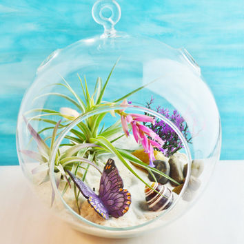 Butterfly Garden Terrarium ~ Large Glass Terrarium Kit ~Tillandsia Air Plant ~ Sand and Butterfly choice ~ Gift Idea ~ Mother's Day Gift