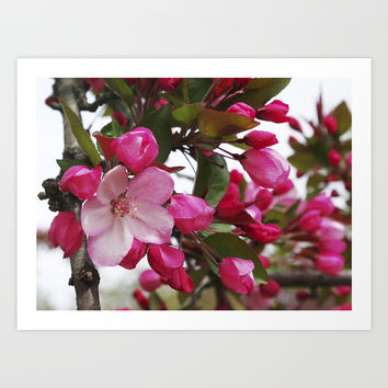 Spring blossoms - Strawberry Parfait Crabapple Art Print by RVJames Designs