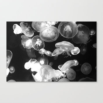 White Moon Jellyfish - Gallery Wrap Canvas, Black Ocean Wall Decor, Nautical Accent Beach Surf Hanging. In 8x10 11x14 16x20 20x24 24x36 inch