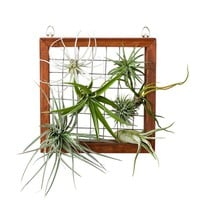 Air Plant Wall Display Frame