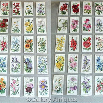 Vintage antique Wills Old English Garden Flowers Full Complete Set of 50 Cigarette Cards in Plastic Sleeves Issued in 1910 (ref: 5011)