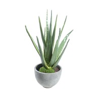 Potted Artificial Aloe - Accessories