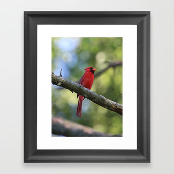 Cardinal Series I Framed Art Print by Theresa Campbell D'August Art