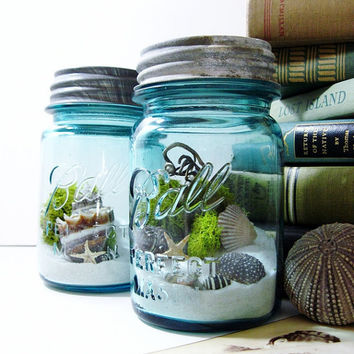 Mason Jar Terrarium Moss Seashells and Lichens  by DoodleBirdie