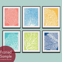 Underwater Sea Coral Collection (Series D) -Set of 6 - 11x14 Prints - Featured in Assorted Colors