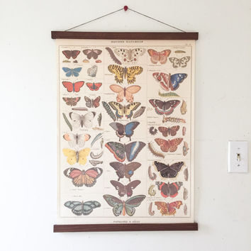 Vintage Butterflies Illustration with Magnetic Poster Holder - Walnut Artwork Print Hanger Wooden Poster Hanging Wood Photo Frame Butterfly