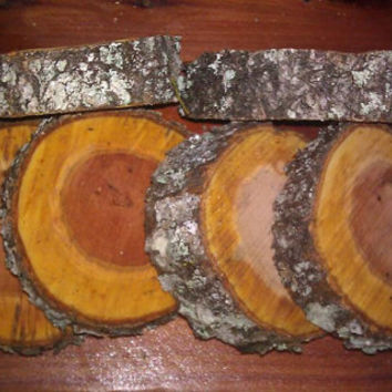 "FIVE (5)  Cherry tree wood slices 1"" thick rustic weddings bridal favors coaster chargers"