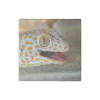 Close up portrait of Tokay gecko in TulaZoo Stone Magnet
