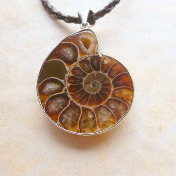 Ammonite Fossil Necklace Natural Stone Nautilus Chocolate Brown Primitive Rustic Unisex Jewelry
