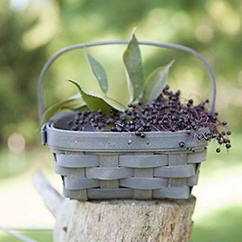 Longaberger Small Berry Basket - 3 Colors  **NEW**