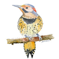 Northern Flicker Watercolor Painting - 8 x 10 Giclee Print - Watercolor Bird Art - 8.5 x 11