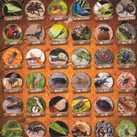 Insects and Bugs Education Poster 24x36