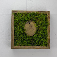 "Tree Slice - Water free green wall art, moss and preserved plants - Vertical garden, green wall decor - Moss decor - 12""x 12"" Rustic Frame"