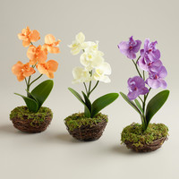 Orchid in Mossy Containers, Set of 3 - World Market