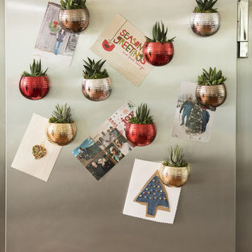 Holiday Mini Magnetized Succulent Garden, Set of 3
