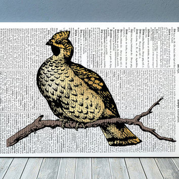 Pheasant decor Animal print Bird poster Wildlife print RTA772