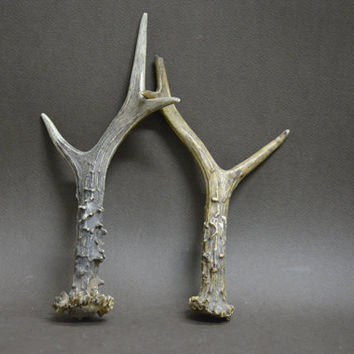 Vintage Trophy Deer Horns ROG SKULL AGENT, Collectible, Gift Idea, Deer, Antler, Hunting, Wall Decor, Rustic Decor