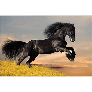 BEAUTIFUL BLACK STALLION collectors horse poster SLEEK EQUINE 24X36 hot new