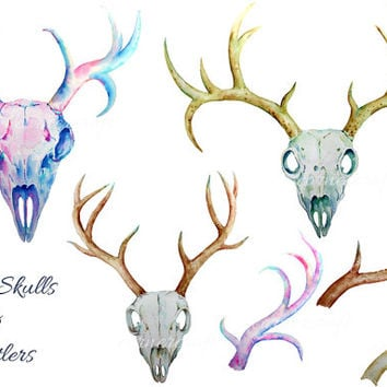 Watercolor clipart - hand drawn family skulls and antlers printable instant download