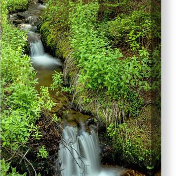 In The Green Refreshing Wilderness Canvas Print