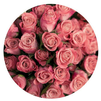 Pastel Pink Rose Print Geometric, Summer Nature Nursery Decor, Paris, 8x10 (Circle) Photograph