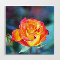 Roses on the city flowerbed. Wood Wall Art by albert12001