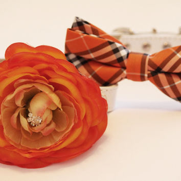 Orange Dog Collars - 2 Chic Dog Collars, Bow tie and Floral collar