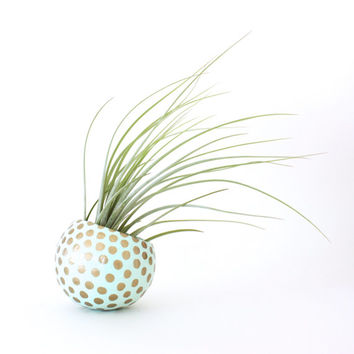Air Planter with Air Plant - Mint with Gold Dots