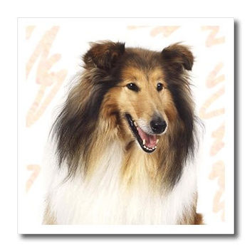 3dRose ht_4544_1 Rough Collie Portrait Iron on Heat Transfer for White Material, 8 by 8-Inch