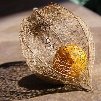 Cape Gooseberry Plant Seeds (Physalis Peruviana) 30+Seeds