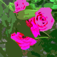 Pink Roses Acrylic Popart Painting 16 x 20 Inches Original Art