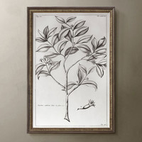 Plant Paintings Wooden Frame Wall