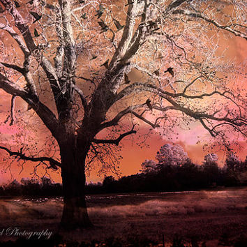 Nature Photography, Surreal Gothic Ravens Tree Landscape, Fall Autumn Orange Peach Nature Landscape, Fantasy Surreal Nature Photograph 8x12