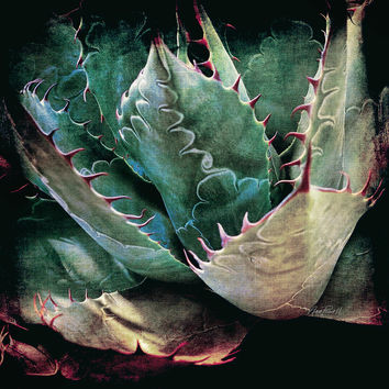Agave - Textured Photo Art