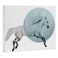 Morgan Kendall White Horse Art Canvas