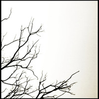8x8 Square Print Winter Tree Nature Black and by SkyeZPhotography