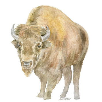 Bison Watercolor - Texas Art - Portrait format Buffalo Painting