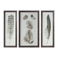 Feather Study Prints - Set of 3 by Uttermost