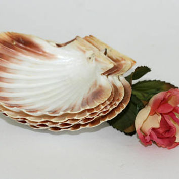 Real Scallop Seashell Serving Dishes | Individual Serving Shell | Seashell Serving Plates Set 5 | Shell Soap Dishes | Nautical Kitchen Decor