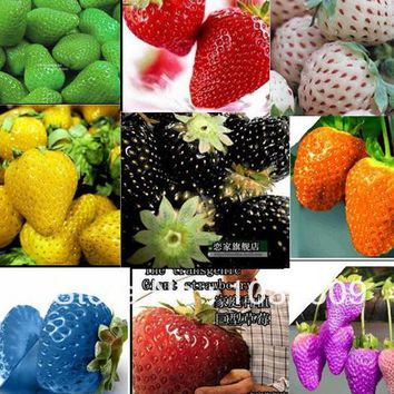 2100pcs 30kinds SuperBig climbing strawberry seeds vegetable Fruit seed of a strawberry seedlings balcony plants garden planting
